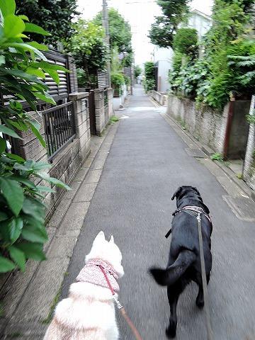 散歩屋日誌【47】_c0062832_15592543.jpg