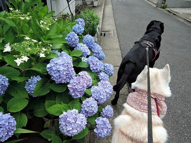 散歩屋日誌【47】_c0062832_15592573.jpg