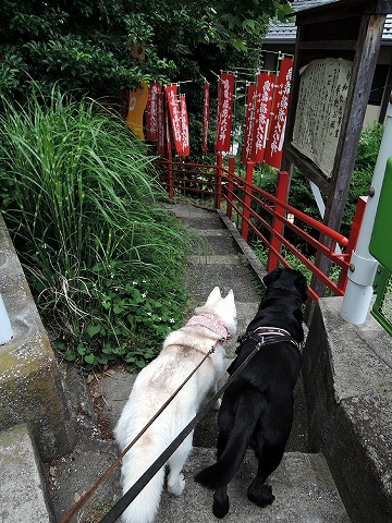 散歩屋日誌【47】_c0062832_16003321.jpg