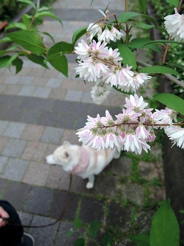 散歩屋日誌【47】_c0062832_16003332.jpg
