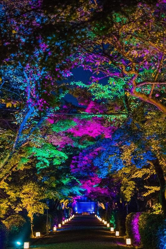 西教寺、夏のライトアップ_e0363038_14210675.jpg