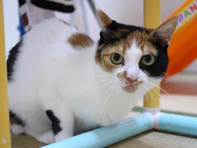 猫のお留守番 四季ちゃん編。_a0143140_21111211.jpg