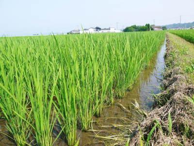 七城米 長尾農園 令和2年度のお米も元気に美しく成長中!今年も美しすぎる田んぼです!_a0254656_20035278.jpg