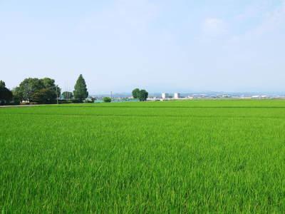 七城米 長尾農園 令和2年度のお米も元気に美しく成長中!今年も美しすぎる田んぼです!_a0254656_20042108.jpg