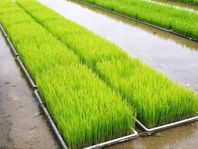 七城米 長尾農園 令和2年度のお米も元気に美しく成長中!今年も美しすぎる田んぼです!_a0254656_20091776.jpg