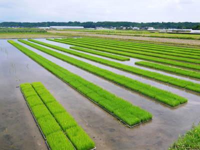 七城米 長尾農園 令和2年度のお米も元気に美しく成長中!今年も美しすぎる田んぼです!_a0254656_20093996.jpg