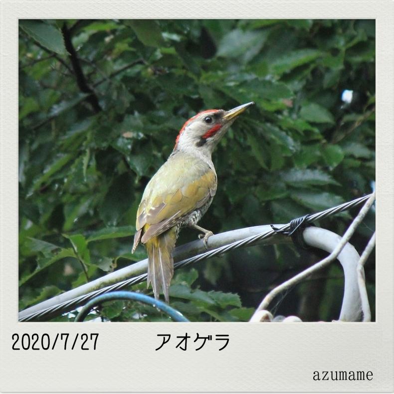 7月の野鳥_d0376975_14531150.jpg