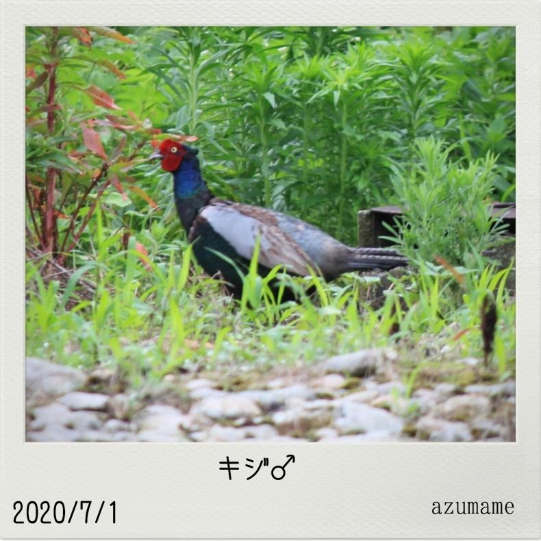 7月の野鳥_d0376975_14533942.jpg