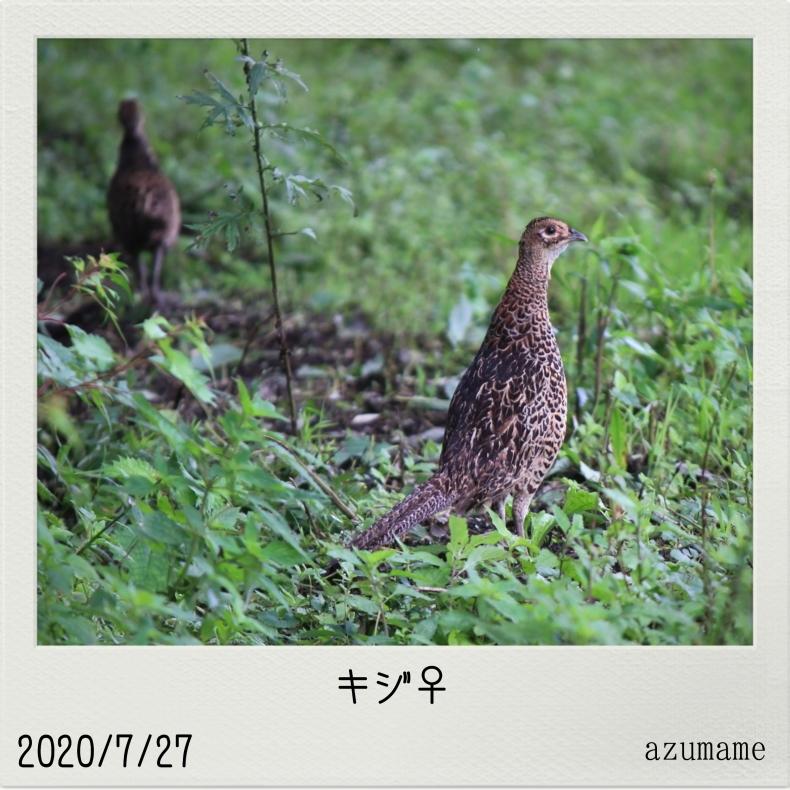 7月の野鳥_d0376975_14535172.jpg