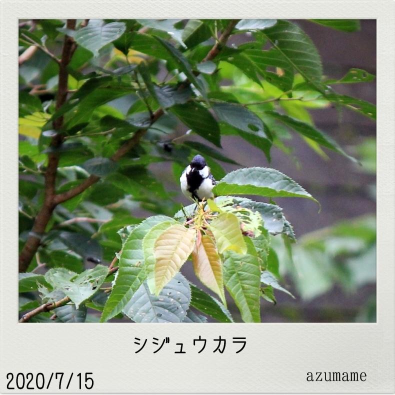 7月の野鳥_d0376975_14540503.jpg