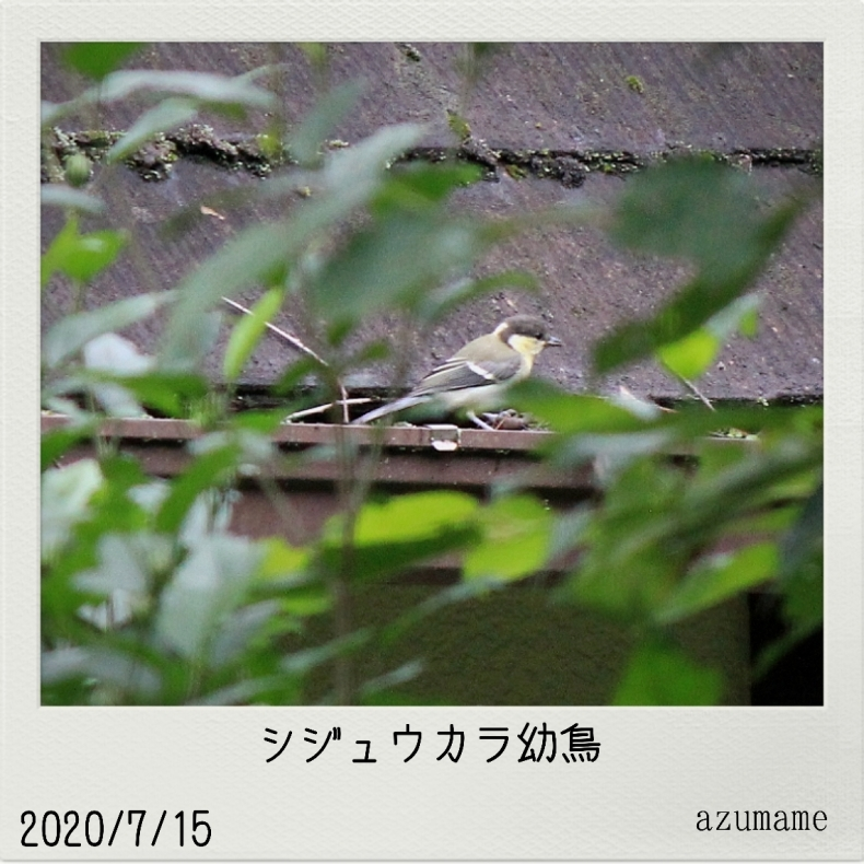 7月の野鳥_d0376975_14542993.jpg