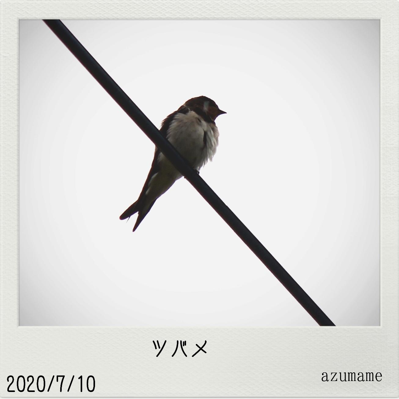 7月の野鳥_d0376975_14545522.jpg
