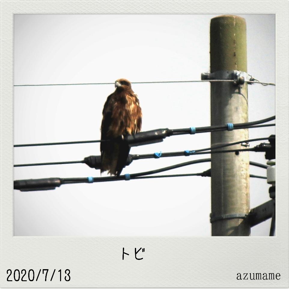 7月の野鳥_d0376975_14550472.jpg