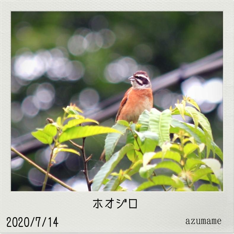 7月の野鳥_d0376975_14551562.jpg