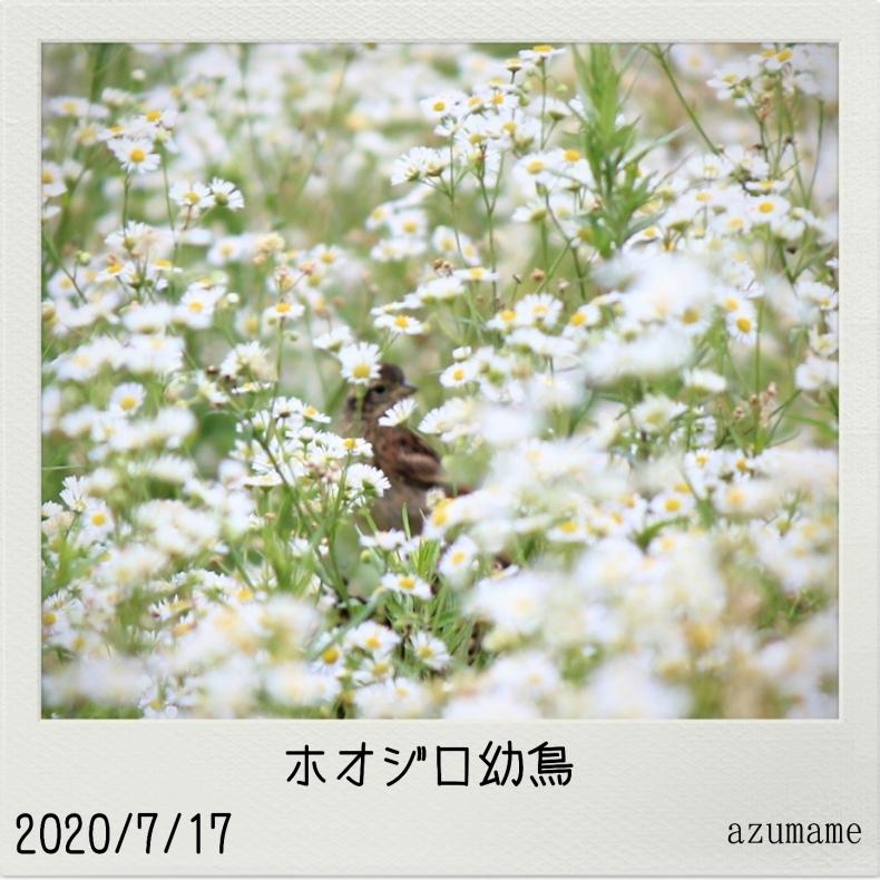7月の野鳥_d0376975_15232043.jpg