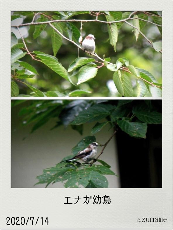 7月の野鳥_d0376975_23481426.jpg