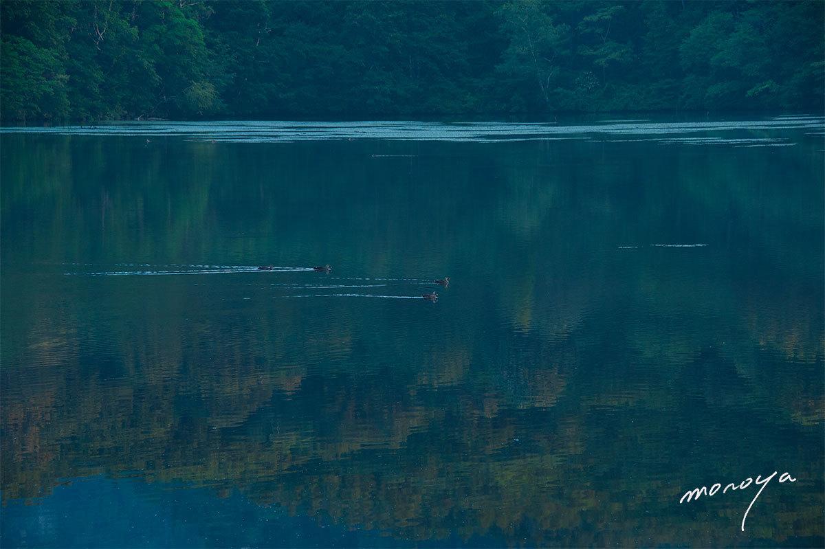 夏の鏡池_c0085877_06125955.jpg