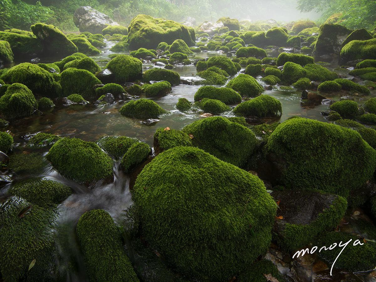 渇水の円原川_c0085877_06132044.jpg