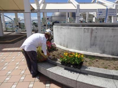 名古屋港水族館前花壇の植栽R2.8.12_d0338682_12591360.jpg