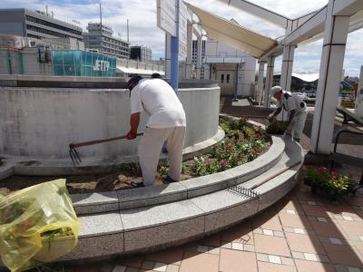 名古屋港水族館前花壇の植栽R2.8.12_d0338682_13080303.jpg