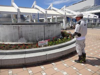 名古屋港水族館前花壇の植栽R2.8.12_d0338682_13082351.jpg