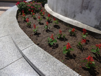 名古屋港水族館前花壇の植栽R2.8.12_d0338682_13084787.jpg