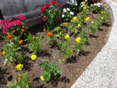 名古屋港水族館前花壇の植栽R2.8.12_d0338682_13090027.jpg