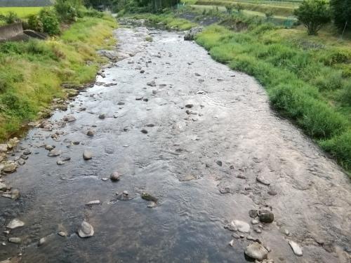 2020/8/12     水位観測  (槻の木橋より)_b0111189_05373397.jpg