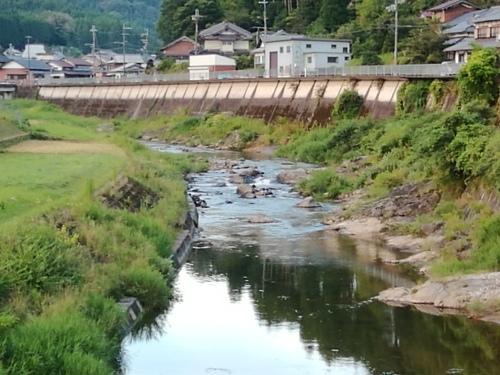 2020/8/12     水位観測  (槻の木橋より)_b0111189_05375293.jpg