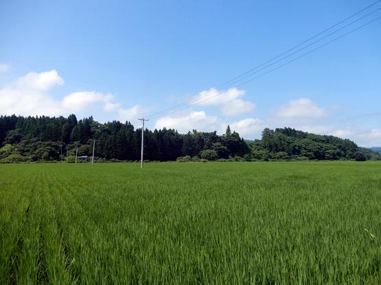 田園と電信柱のある風景_d0366590_06151529.jpg