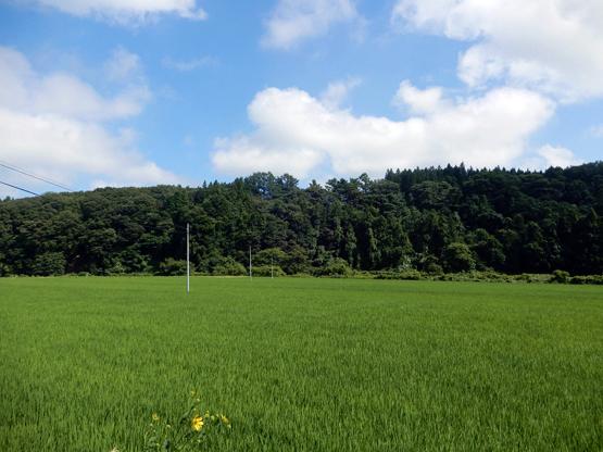 田園と電信柱のある風景_d0366590_06151627.jpg