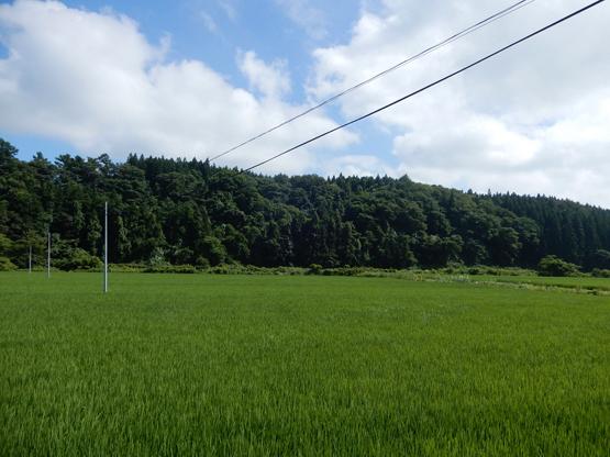 田園と電信柱のある風景_d0366590_06151640.jpg