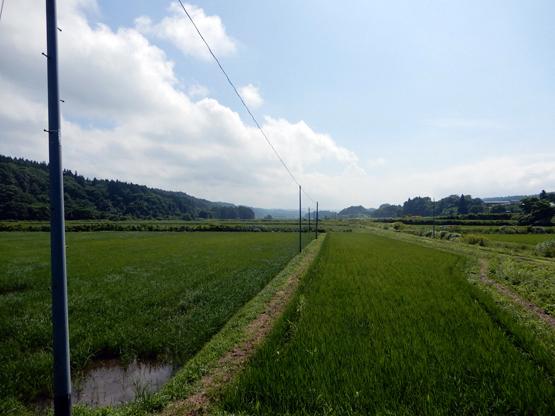 田園と電信柱のある風景_d0366590_06151655.jpg