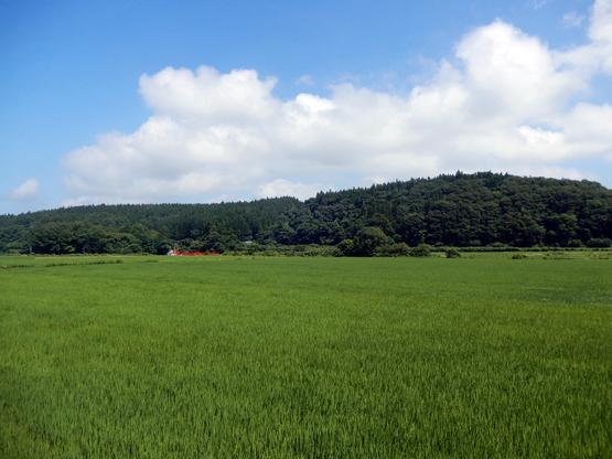 田園と電信柱のある風景_d0366590_06151659.jpg