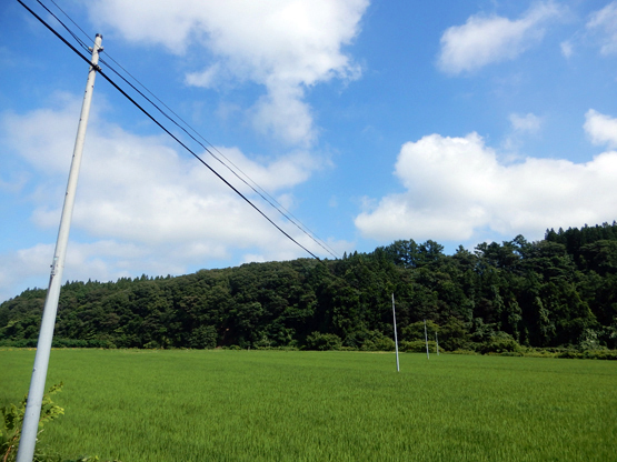 田園と電信柱のある風景_d0366590_06151692.jpg