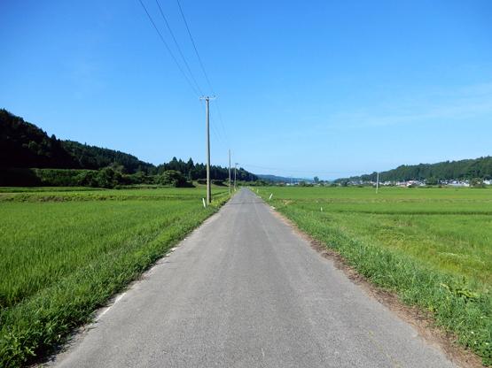 田園と電信柱のある風景_d0366590_06154180.jpg
