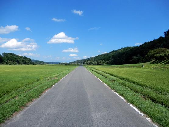 田園と電信柱のある風景_d0366590_06154257.jpg