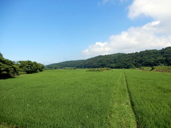 田園と電信柱のある風景_d0366590_06175481.jpg