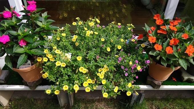 夏の花。_d0053207_09540727.jpg