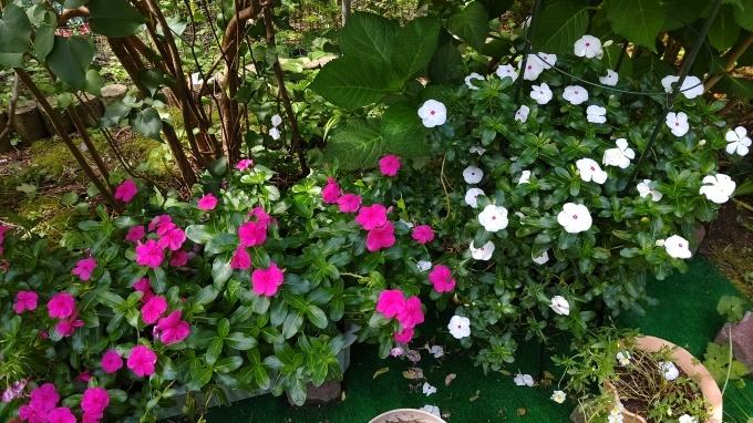 夏の花。_d0053207_09543373.jpg