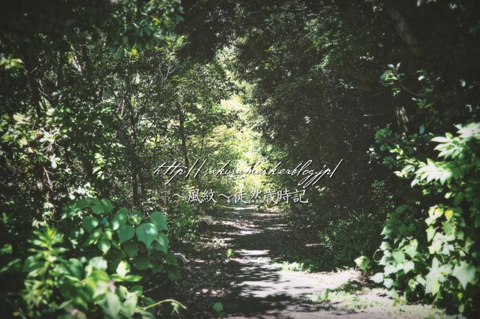 墓所への道。_f0235723_17162951.jpg