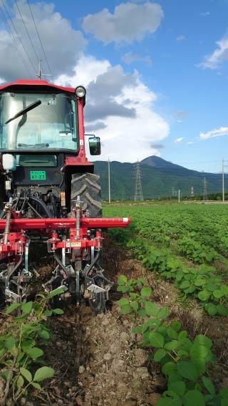 大豆の土かけ作業_a0259132_20373606.jpg