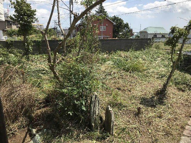 草丈2m超え・・・刈り込みました、_f0031037_18173000.jpg