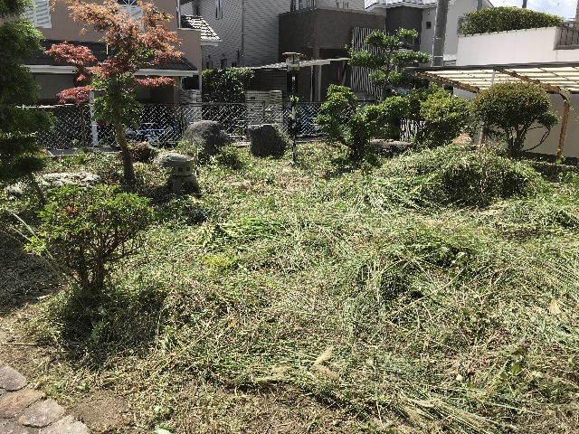 草丈2m超え・・・刈り込みました、_f0031037_18185208.jpg