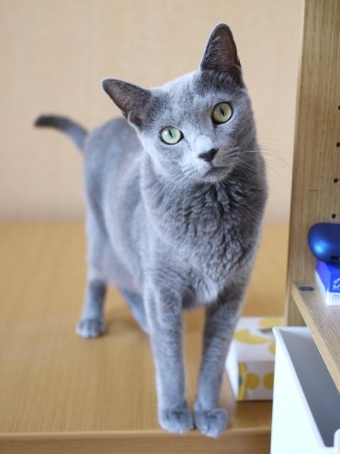 猫のお留守番 ルウちゃん編。_a0143140_20595657.jpg