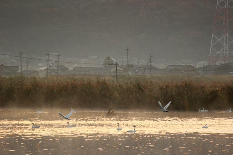 古いコンデジで撮った白鳥(前編)_e0403850_20435537.jpg