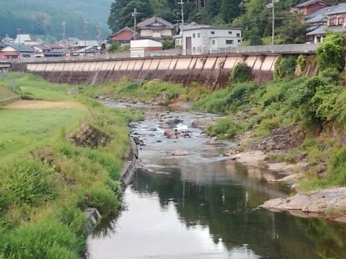 2020/8/13     水位観測  (槻の木橋より)_b0111189_05424746.jpg