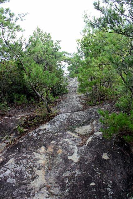 熊山登山 権現道コースを登る!の巻_f0325295_11475482.jpg