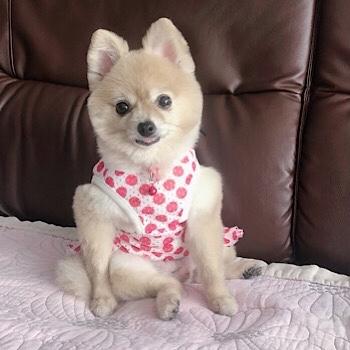 HOGO犬ひらりの近況報告_f0249610_20491785.jpg