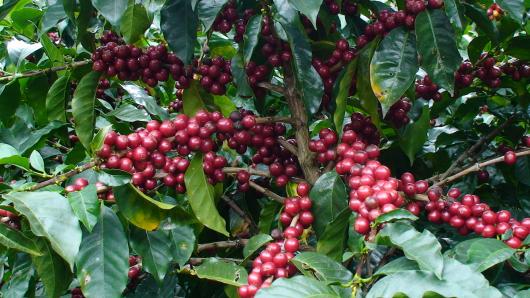 ** 8/16 第三日曜日 コーヒー豆セール販売日(ニコマルシェは中止) **_b0136223_15401388.png